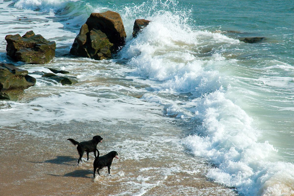 Dogs and Surf