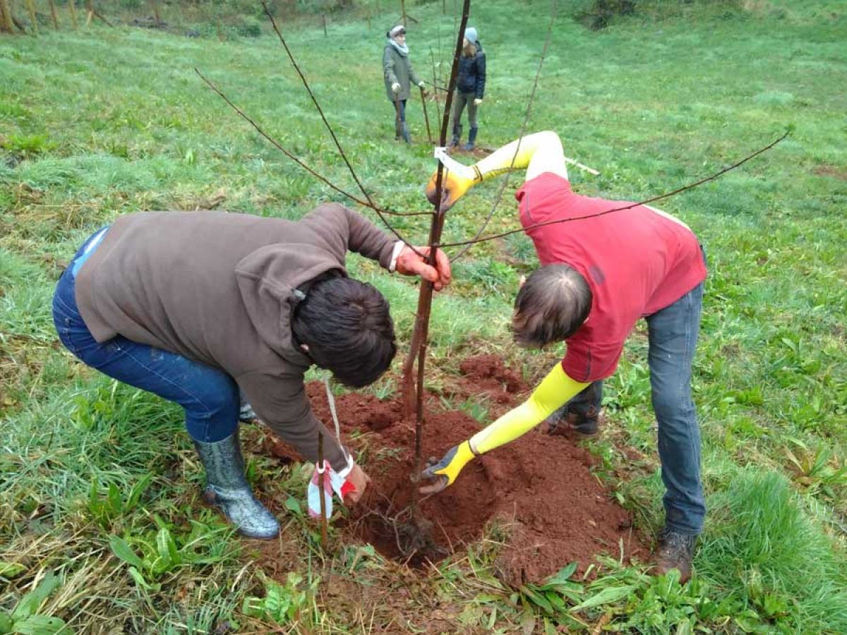 The Sharpham Trust - Tree Care Day